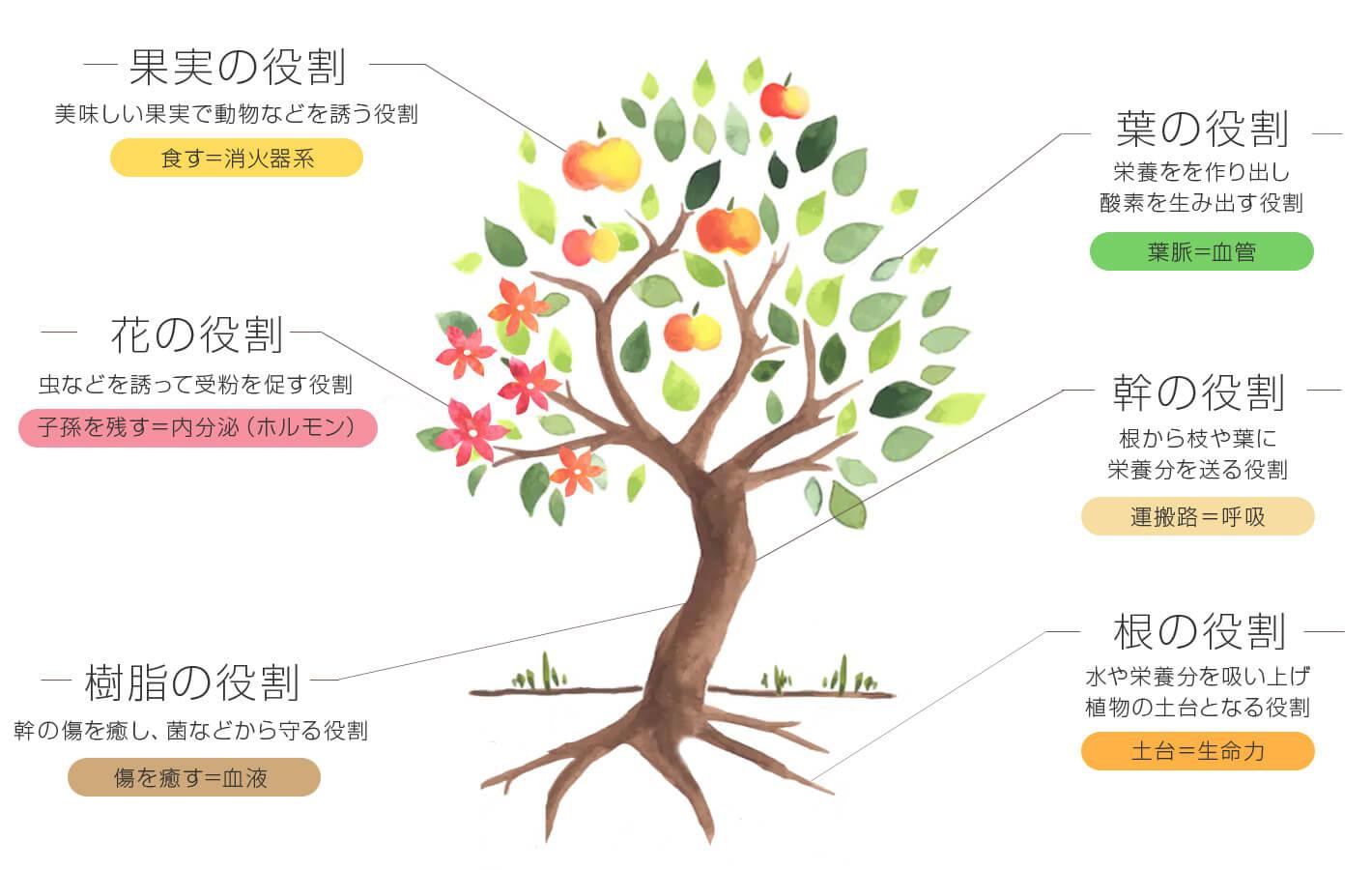 植物の部位と精油の関係